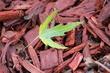 Green on red_9960.jpg