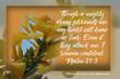 Psalm 27 3  yellow flower 5558(1).jpg