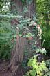 Summer Tree with berries 9979.jpg