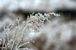 snowy branch_5761.jpg