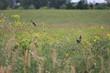 Bird _8861.jpg