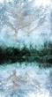 Birches reflection 3225paintedgesoft.jpg