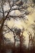 Trees_MG_8634bwget.jpg