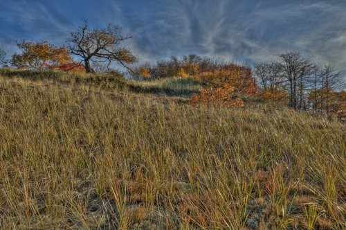 Autumn Companions to the rushing grass 2011.jpg
