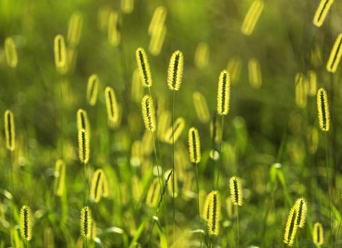Glowing Grass.jpg