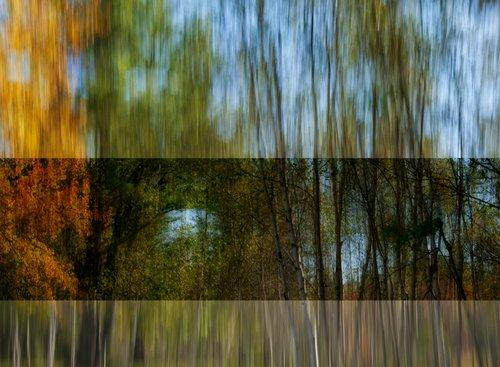 Birch Gnosis.jpg