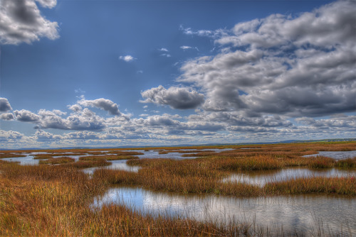 Salt Marsh with Clouds.jpg
