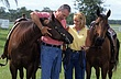 Couple Horses.jpg