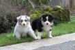 Kellis Puppies_00231.jpg