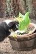 Kellis Puppies_0049.jpg