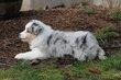 Kellis Puppies_0062.jpg