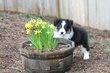 Kellis Puppies_0073.jpg