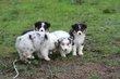 Kellis Puppies_0078.jpg