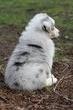 Kellis Puppies_0082.jpg
