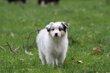 Kellis Puppies_0088.jpg