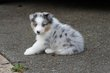 Kellis Puppies_0139.jpg