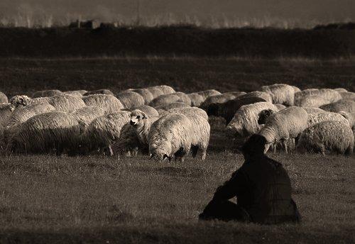 Pastoral life.jpg