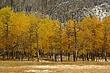 Banff Area 01.jpg