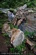 Cascades-RCC-2.jpg