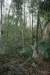 Florida Everglades 07.jpg