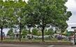 Little Island Park 034A.jpg