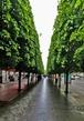 Met Plaza trees 03A.jpg
