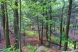 Woodstock-Overlook 04A.jpg