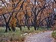 Albuquerque Bosque 02A.jpg