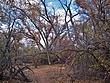 Albuquerque Bosque 03A.jpg