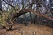 Albuquerque Bosque 04A.jpg