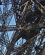 Paris Eiffel Tower Struts 04.jpg