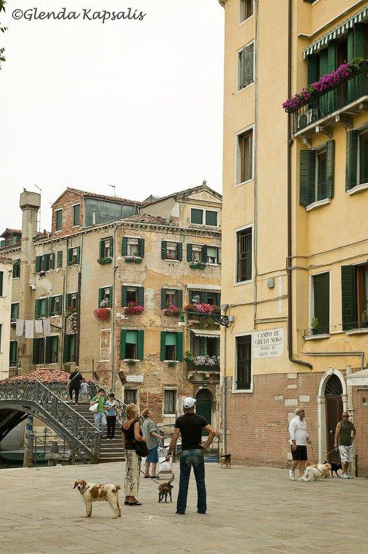 Dogs in Venice.jpg