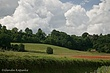 Tuscany Poppies2.jpg