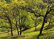 Blue Oak Hillside 2.jpg