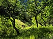 Blue Oak Hillside 3.jpg