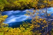 Metolius River In Fall 1.jpg