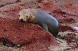 Sea Lion Pup 2.jpg