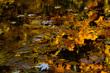 Autumn Kaleidascope_5849_Chang(1).jpg