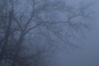 Bare Trees in Fog Wildcat Creek Indiana (77668).jpg