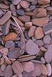 Beach cobble . feather Moro Bay CA.jpg