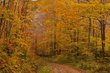 Dirt Road Fall Lincoln Notch Green Mountains Vermont (VT-75097).jpg