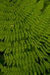 Fern Pattern Cape Perpetua Oregon 8033-1.jpg