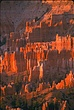 Sunrise hoodoos Bryce National Park.jpg
