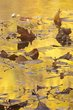 Abstract Yellows Wildcat Creek Indiana 74034.jpg