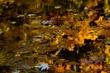 Autumn Kaleidoscope Indiana 5849.jpg
