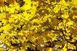Autumn Mosaic 74190-2_Chang.jpg