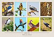 Birds of Africa.jpg