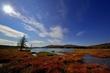 Autumn Marsh -- Marais d automne.jpg