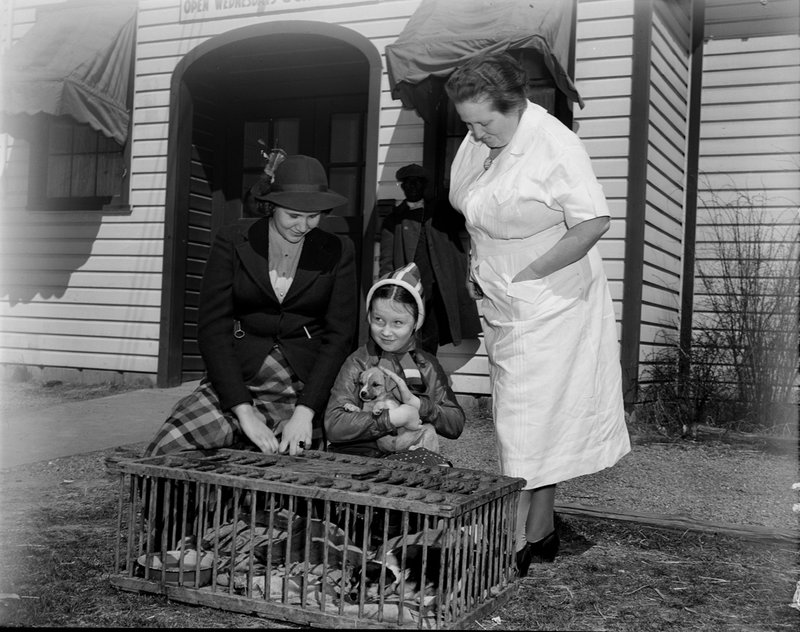 A211-D Montgomery Farm Womens Co-op Market Exterior Puppy Dog Children Wisconsin Ave 1939.jpg