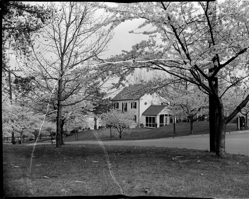 A368-2 Kenwood Cherry Bloosoms Home 1939.jpg :: 1939 Kenwood Cherry Blossoms